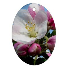 Apple Blossom  Oval Ornament by ADIStyle
