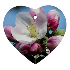 Apple Blossom  Heart Ornament