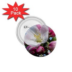 Apple Blossom  1 75  Button (10 Pack) by ADIStyle