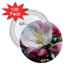 Apple Blossom  2 25  Button (100 Pack) by ADIStyle