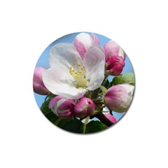 Apple Blossom  Magnet 3  (round) by ADIStyle