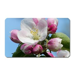 Apple Blossom  Magnet (rectangular)
