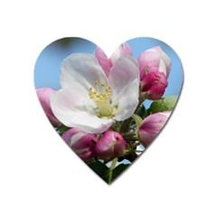 Apple Blossom  Magnet (Heart)