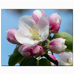 Apple Blossom  Canvas 8  X 10  (unframed) by ADIStyle