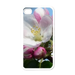 Apple Blossom  Apple Iphone 4 Case (white) by ADIStyle