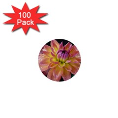 Dahlia Garden  1  Mini Button (100 Pack) by ADIStyle