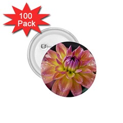 Dahlia Garden  1 75  Button (100 Pack) by ADIStyle