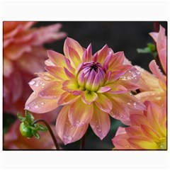 Dahlia Garden  Canvas 11  X 14  (unframed) by ADIStyle