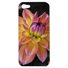 Dahlia Garden  Apple Iphone 5 Hardshell Case by ADIStyle