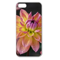 Dahlia Garden  Apple Seamless Iphone 5 Case (clear)