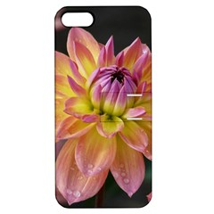 Dahlia Garden  Apple Iphone 5 Hardshell Case With Stand by ADIStyle