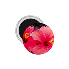 Red Hibiscus 1 75  Button Magnet by ADIStyle