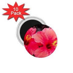 Red Hibiscus 1 75  Button Magnet (10 Pack) by ADIStyle