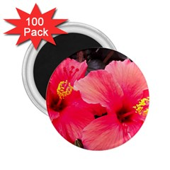 Red Hibiscus 2 25  Button Magnet (100 Pack) by ADIStyle