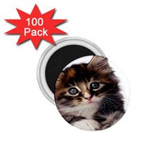 Curious Kitty 1 75  Button Magnet (100 Pack)