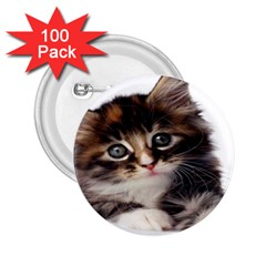 Curious Kitty 2 25  Button (100 Pack)