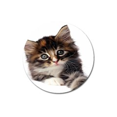 Curious Kitty Magnet 3  (round)