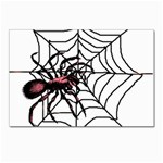Spider in web Postcard 4  x 6