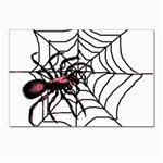 Spider in web Postcard 5  x 7