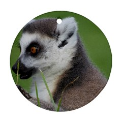 Ring Tailed Lemur  2 Round Ornament