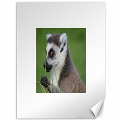 Ring Tailed Lemur  2 Canvas 36  X 48  (unframed)
