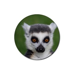 Ring Tailed Lemur Drink Coasters 4 Pack (Round)