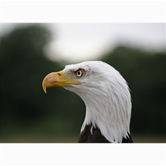 Bald Eagle (1) Canvas 20  X 24  (unframed) by smokeart