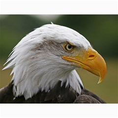 Bald Eagle (2) Canvas 12  X 16  (unframed) by smokeart