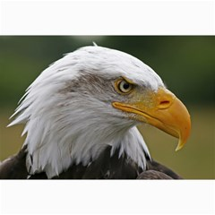 Bald Eagle (2) Canvas 12  X 18  (unframed)