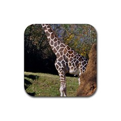 Giraffe Drink Coasters 4 Pack (square)