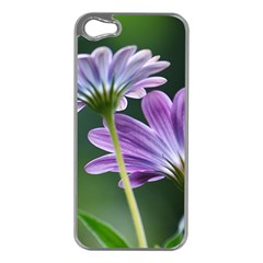 Flower Apple Iphone 5 Case (silver) by Siebenhuehner