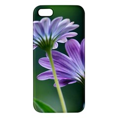 Flower Iphone 5 Premium Hardshell Case by Siebenhuehner