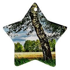Trees Star Ornament by Siebenhuehner