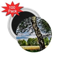 Trees 2 25  Button Magnet (100 Pack) by Siebenhuehner