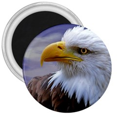 Bald Eagle 3  Button Magnet by Siebenhuehner
