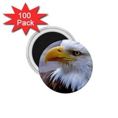 Bald Eagle 1 75  Button Magnet (100 Pack) by Siebenhuehner