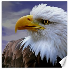 Bald Eagle Canvas 12  X 12  (unframed)