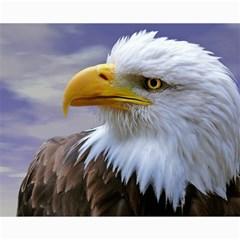 Bald Eagle Canvas 16  X 20  (unframed) by Siebenhuehner