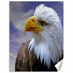 Bald Eagle Canvas 18  X 24  (unframed) by Siebenhuehner