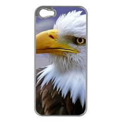 Bald Eagle Apple Iphone 5 Case (silver) by Siebenhuehner