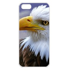 Bald Eagle Apple Iphone 5 Seamless Case (white) by Siebenhuehner