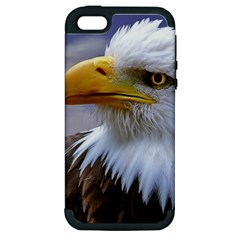 Bald Eagle Apple Iphone 5 Hardshell Case (pc+silicone) by Siebenhuehner