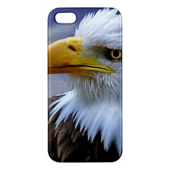 Bald Eagle Iphone 5s Premium Hardshell Case by Siebenhuehner