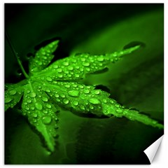 Leaf With Drops Canvas 20  X 20  (unframed) by Siebenhuehner