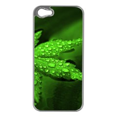 Leaf With Drops Apple Iphone 5 Case (silver) by Siebenhuehner