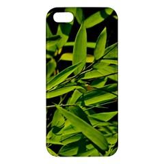 Bamboo Iphone 5 Premium Hardshell Case by Siebenhuehner