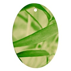 Bamboo Oval Ornament by Siebenhuehner