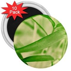 Bamboo 3  Button Magnet (10 Pack) by Siebenhuehner