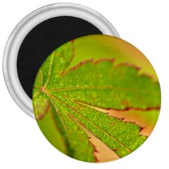 Leaf 3  Button Magnet by Siebenhuehner