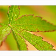Leaf Canvas 16  X 20  (unframed) by Siebenhuehner